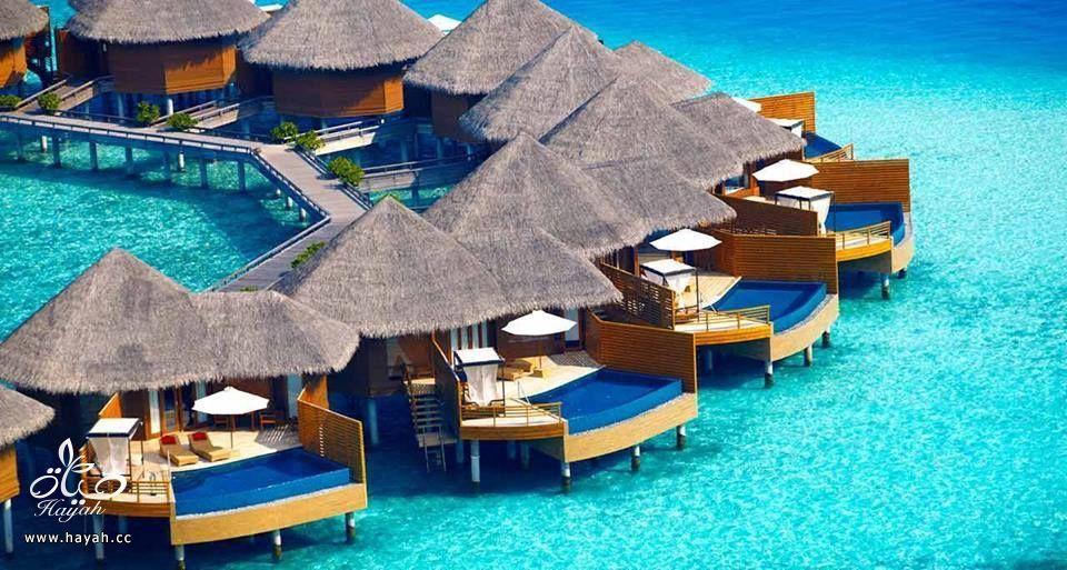 جمال جزر المالديف hayahcc_1440233310_204.jpg