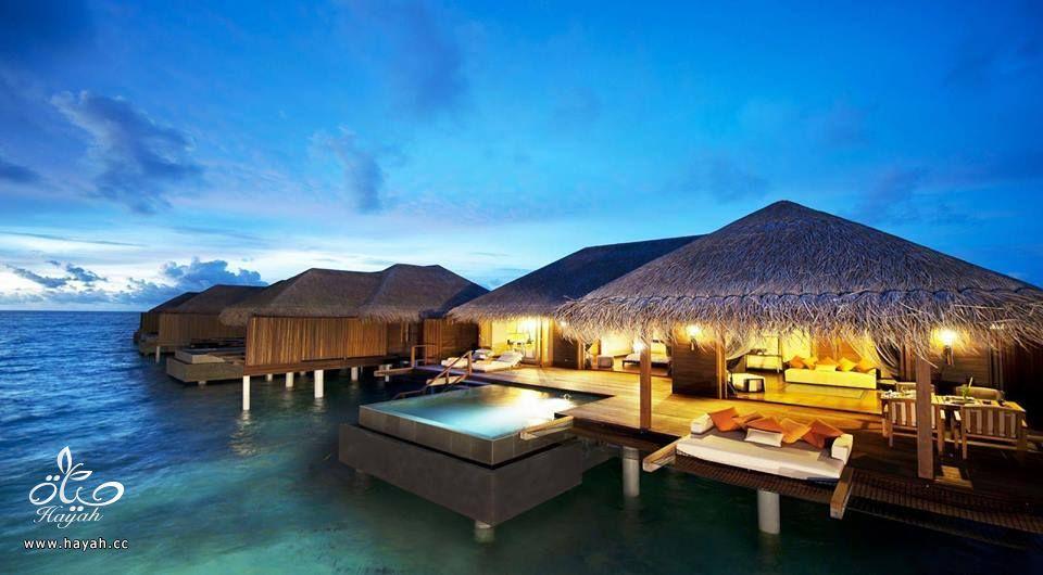 جمال جزر المالديف hayahcc_1440233313_380.jpg