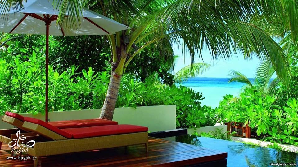 جمال جزر المالديف hayahcc_1440233313_549.jpg