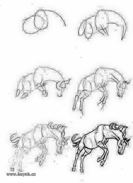 تعلمي الرسم خطوة بخطوة بالصور hayahcc_1440669987_729.jpg