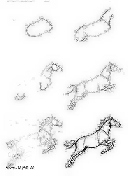 تعلمي الرسم خطوة بخطوة بالصور hayahcc_1440669987_976.jpg