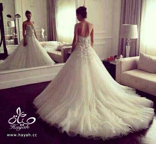 أجمل بدل الزفاف بذيل طويل hayahcc_1442077675_456.jpg