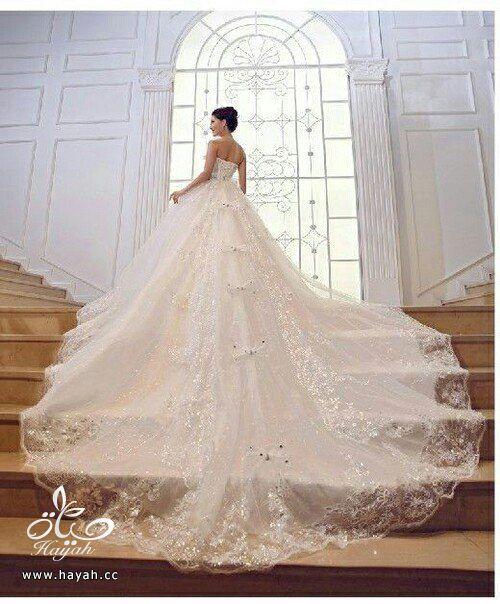 أجمل بدل الزفاف بذيل طويل hayahcc_1442077675_564.jpg
