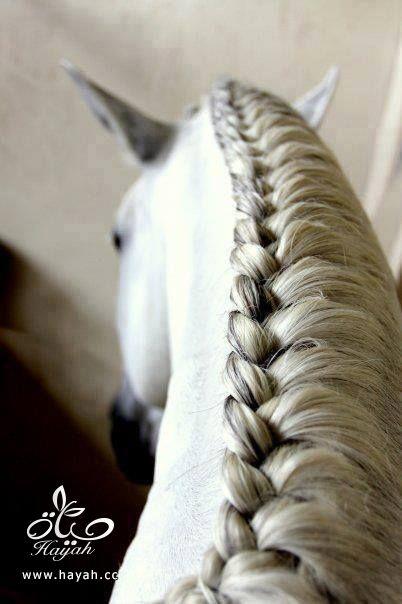 جدائل لأحصنة روعة hayahcc_1442531047_703.jpg