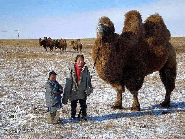 أول مرة حتشوف أطفال منغوليا مع حيواناتهم hayahcc_1442632982_578.jpg