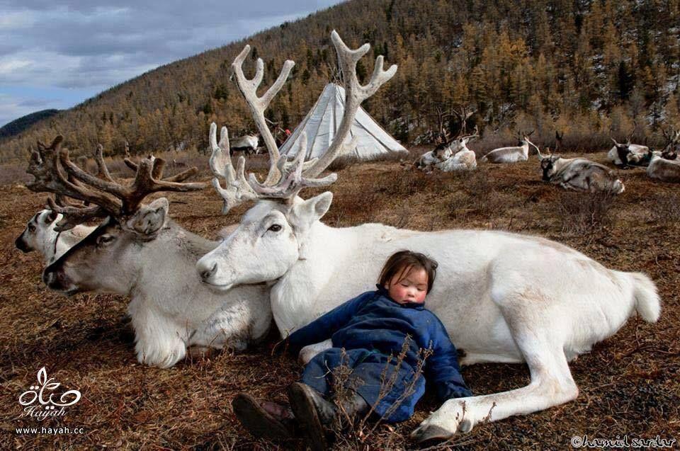 أول مرة حتشوف أطفال منغوليا مع حيواناتهم hayahcc_1442633072_455.jpg