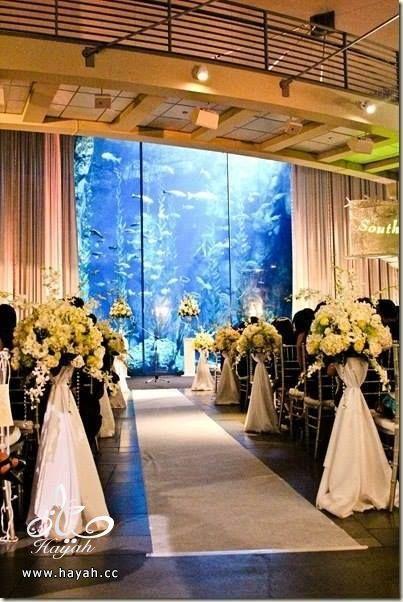 قاعة أفراح تحت البحر hayahcc_1442752482_256.jpg