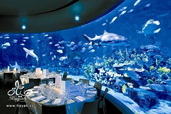قاعة أفراح تحت البحر hayahcc_1442752483_707.jpg