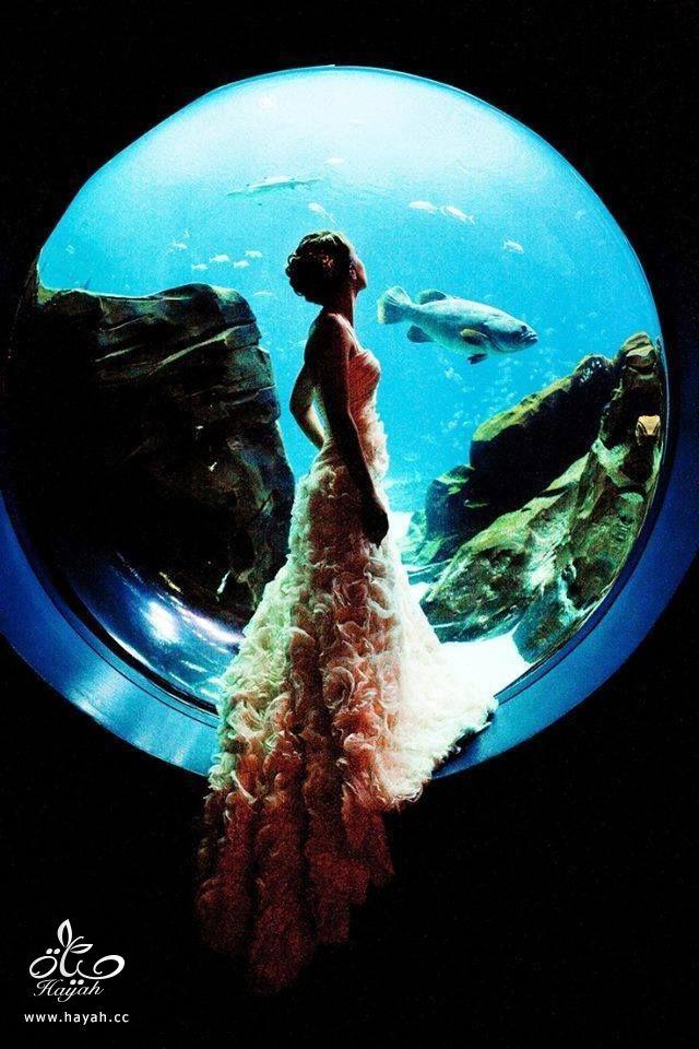 قاعة أفراح تحت البحر hayahcc_1442752484_912.jpg