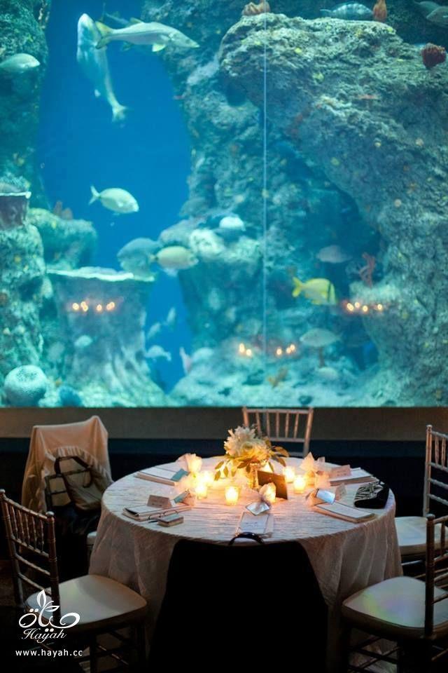 قاعة أفراح تحت البحر hayahcc_1442752485_520.jpg