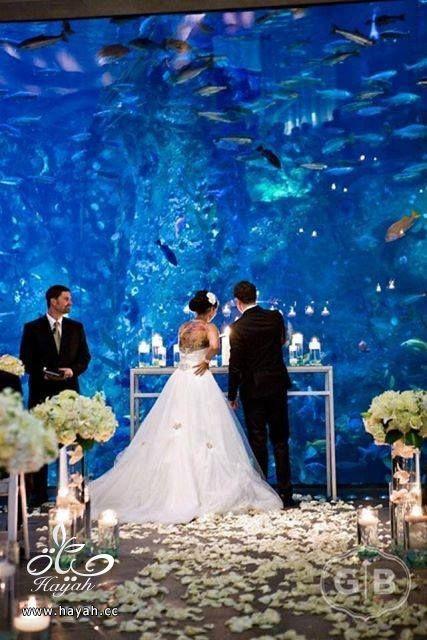 قاعة أفراح تحت البحر hayahcc_1442752486_334.jpg