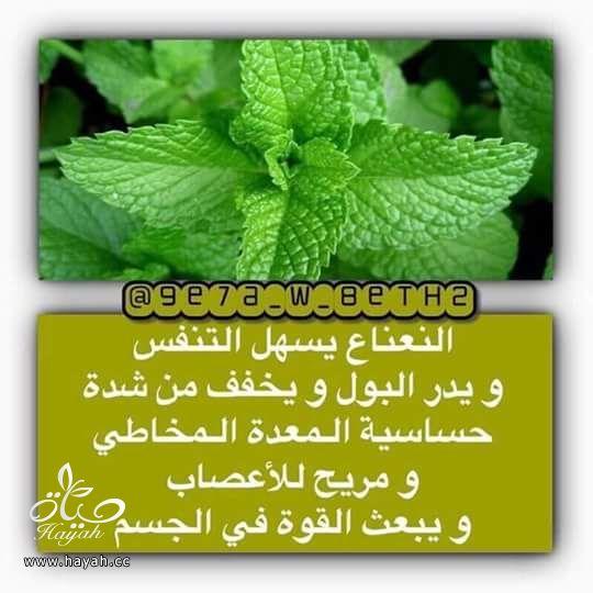 أبزر النصائح لبعض خضراوات المطبخ hayahcc_1443462362_955.jpg