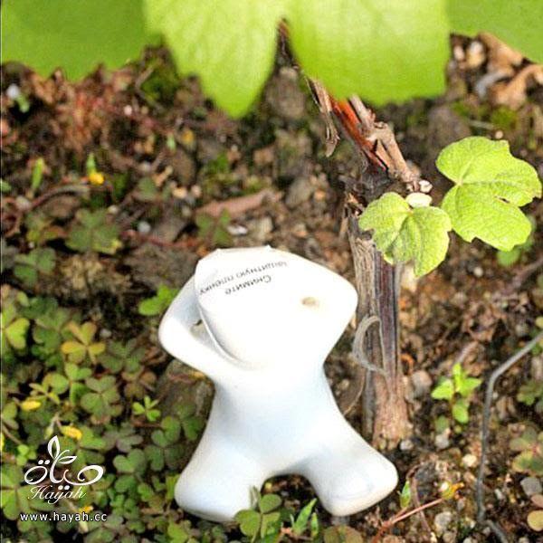 فازات جميلة لتضعي فيها نباتاتك الطبيعية hayahcc_1446048184_899.jpg