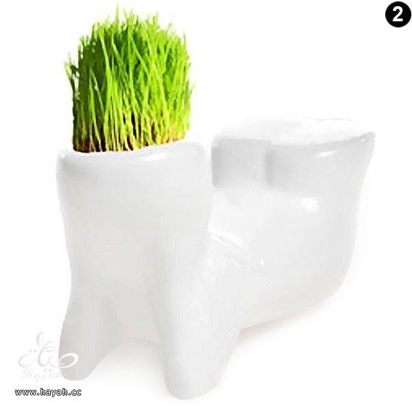 فازات جميلة لتضعي فيها نباتاتك الطبيعية hayahcc_1446048185_964.jpg