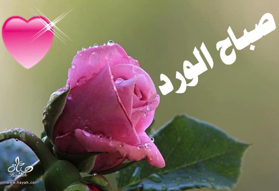 فساتين سهرة hayahcc_1469930854_384.jpg