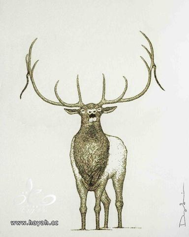 فنان أمريكي يستخدم البارود لعمل لوحات رائعة hayahcc_1496472879_581.jpeg